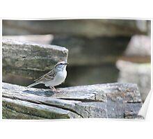 Smoky Mountain Bird Poster
