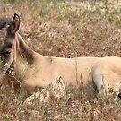 Springtime Foal by Gene Praag