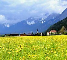 Spring meadow in Alps by Elzbieta Fazel