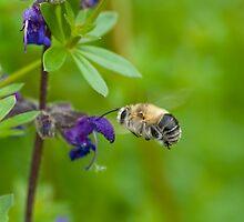 Flying Bumblebee by Valerija S.  Vlasov