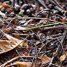 Beneath the Black Palms by Kerryn Madsen-Pietsch
