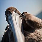 Along her beak by williamsrdan