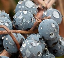Wet Grapes by williamsrdan