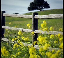 Fence Line by williamsrdan