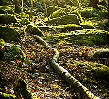 Moss on Rocks by Colin Metcalf