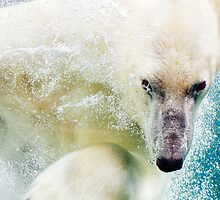 Polar Bear In Water by PatiDesigns