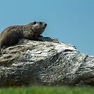 Chilling on a nice spring day by Jim Butera
