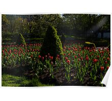 Downtown Victorian Garden - Red Tulips and Sunshine Poster