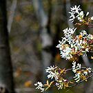Spring Blossoms in a Dark Woods by goddarb