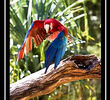 THE BEAUTIFUL MACAW by paulv