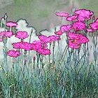 Lined Carnations by Eileen McVey