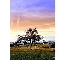 Old tree and amazing cloudy sky | landscape photography Photographic Print