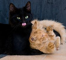 Cats at Play by Valerija S.  Vlasov