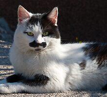 Kitty of Krk by Valerija S.  Vlasov