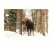 Bull moose in a winter landscape Art Print