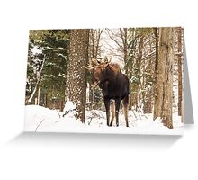 Bull moose in a winter landscape Greeting Card