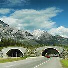 Banff's Wildlife Overpass by Dyle Warren
