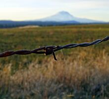 Mt Adams barbed wire by dakinecascadia