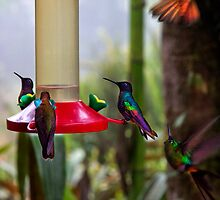 Hummingbird Gathering In Mindo Ecuador by Al Bourassa