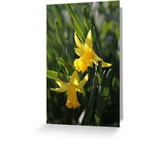 Daffodils in the sun and grass Greeting Card