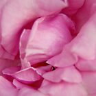 Pink petals by MarthaBurns
