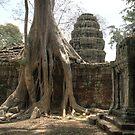Ta Prohm, Tree #1 by Nicolas Noyes