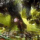 on mystic pond...revisited by banrai