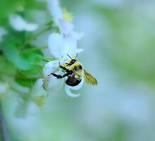 Bee & Blossom by Laurie Minor