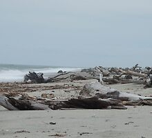 Seascape -  Driftwood Washed up on Beach  by Kim-maree Clark
