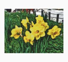 Shy Daffodils  by Withintensity Touch