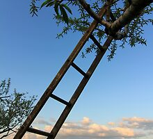 Apple Ladder by reindeer