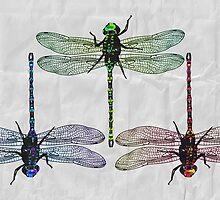 Dragon Fly by Brieana