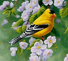 Male Goldfinch Samsung Phone Case by csforest