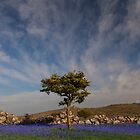 Holwell Lawn by AndyCosway