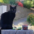 Black cat I by Lynn Starner