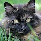 Dusty Tortie by Lynn Starner