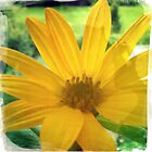 Comfy Yellow Flower by appfoto
