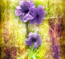 Mexican Petunias by designingjudy