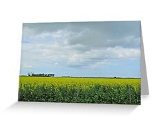 Clouds and canola Greeting Card