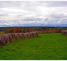 Hay Fields of Nova Scotia by BrasdOrLife
