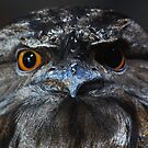 Tawny Frog Mouth  - Dimo by john  Lenagan