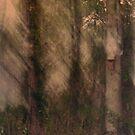 Tree House by Mark Wade