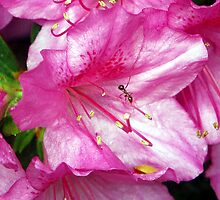 Ant on An Azalea by Righteous Zombie Photography