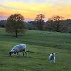 Sunset of the Lamb by Cat Perkinton