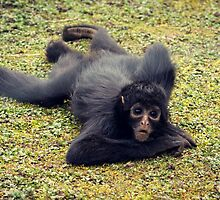 The Monkey in His Playground by Tabatha Thistleton