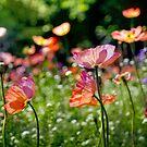 Flowers in Paris by Laurent Hunziker