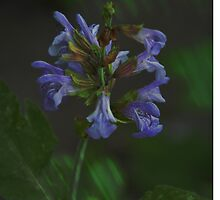 Artistic Sage Flowers by walstraasart