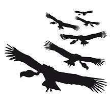 Flying circling vultures pattern by Style-O-Mat