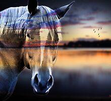 horse  by motiashkar