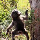cheeky monkey by gruntpig